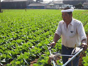 tuyển thực tập sinh trồng rau tịa nhật bản
