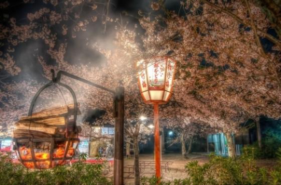 Thắp hương tại lễ hội Kyoto Cherry Blossom