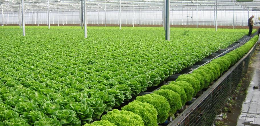 Tuyển 6 nữ làm nông nghiệp trồng rau tại Nhật Bản