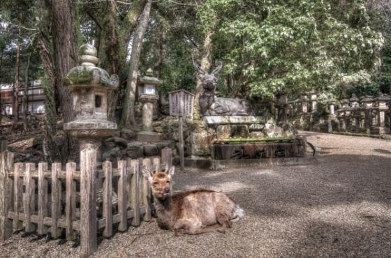 Sở thú ở Nara