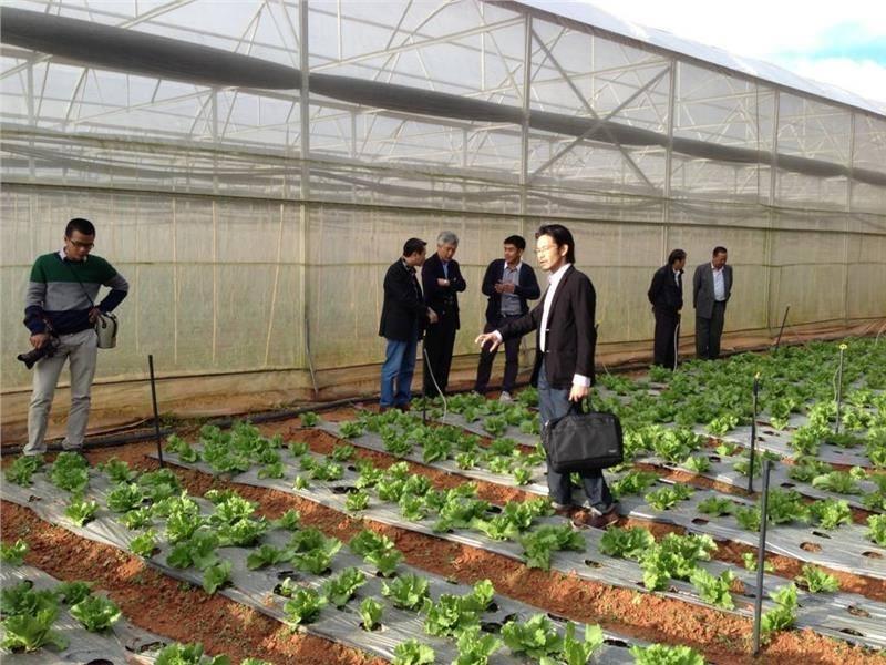 Đơn hàng nông nghiệp 1 năm trong nhà kính