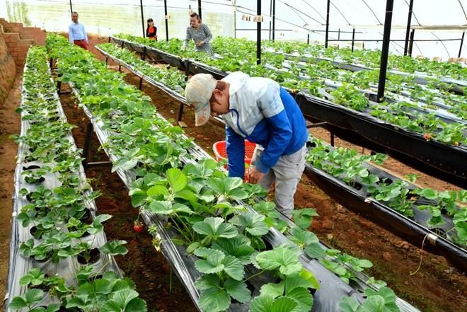 Làm nông nghiệ tại Nhật Bản