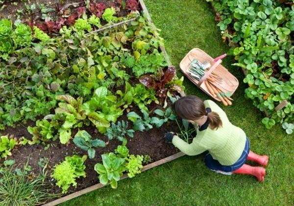 Ngành nông nghiệp ở Nhật Bản rất sạch và cho năng suất cao