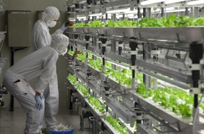 Kỹ sư nông nghiệp làm việc tại Nhật Bản