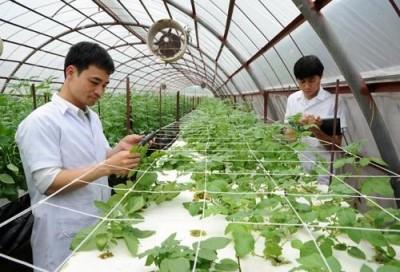 Làm nông nghiệp thỏa mái về thời gian hơn các cv khác