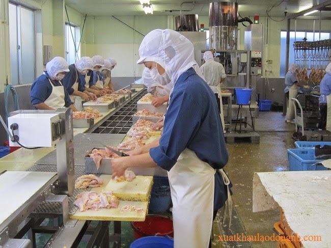 Thực tập sinh tại công ty TOKIMEKI làm chế biến thịt gà