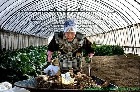 Chăm sóc ruộng rau hàng ngày là phương pháp tăng tuổi thọ của người Nhật Bản