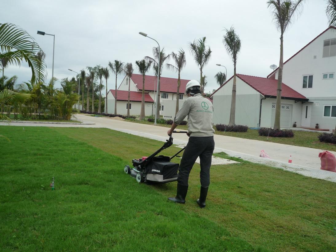 Công nhân cắt tỉa cỏ trong khuân viên