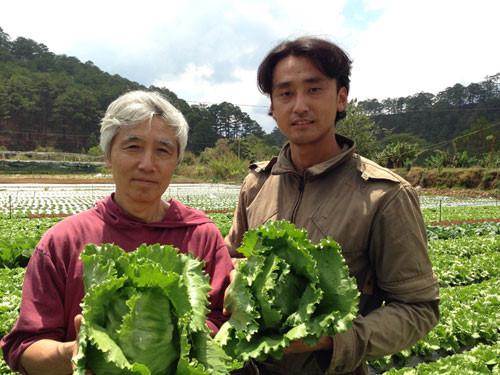 ngành nông nghiệp trồng rau của Nhật Bản