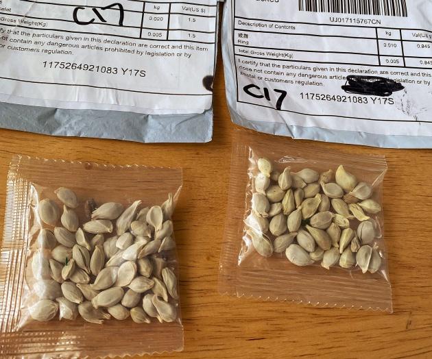 Những gói hạt giống từ Trung Quốc bí ẩn xuất hiện trong hòm thư của nhiều nhà tại Nhật Bản