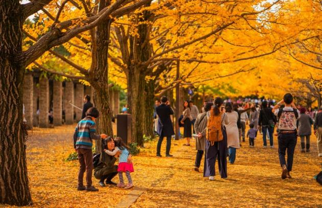 Khí hậu Nhật Bản vào mùa thu mát mẻ với khung sắc hữu tình của mùa thay lá