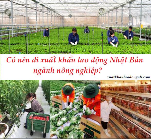 Có nên chọn xuất khẩu lao động Nhật Bản ngành nông nghiệp không?